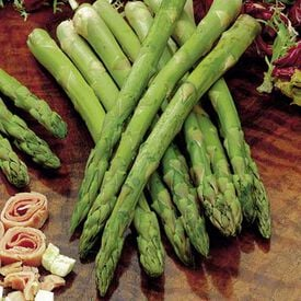 Jersey Knight, (F1) Asparagus Seeds