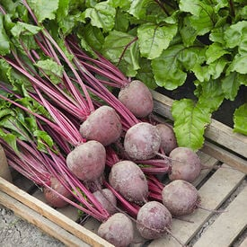 Lutz Green Leaf Red Stem, Beet Seeds