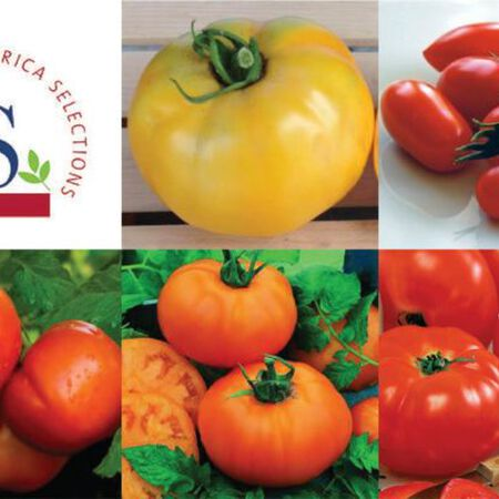 All American Selection Collection, Tomato Seeds - Seed Collection image number null