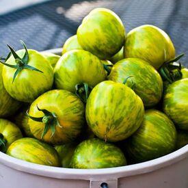 Green Zebra, Tomato Seeds