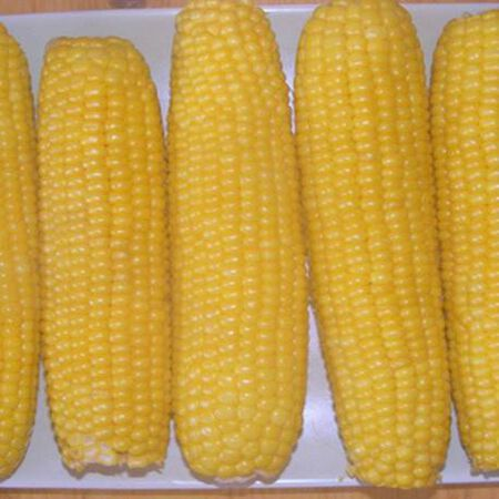 Incredible, Corn Seed - Packet (1 oz.) image number null