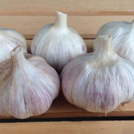 German Red, Garlic Bulbs image number null