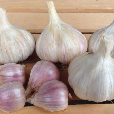 Romanian Red, Garlic Bulbs - 1/4 Pound image number null