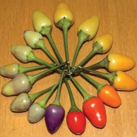 Bolivian Rainbow, Pepper Seeds - Packet image number null