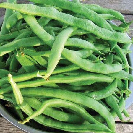 Kentucky Wonder 125, Bean Seeds - Packet (1 oz.) image number null