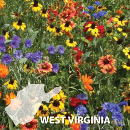 West Virginia Blend, Wildflower Seed - 1 Ounce image number null