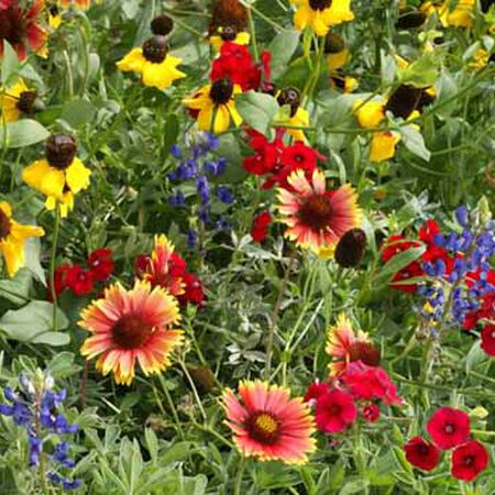 Texas & Oklahoma Native Mix, Wildflower Seeds - 1 Ounce image number null