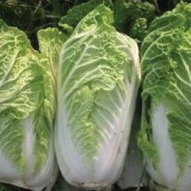 Michihili, Cabbage Seeds