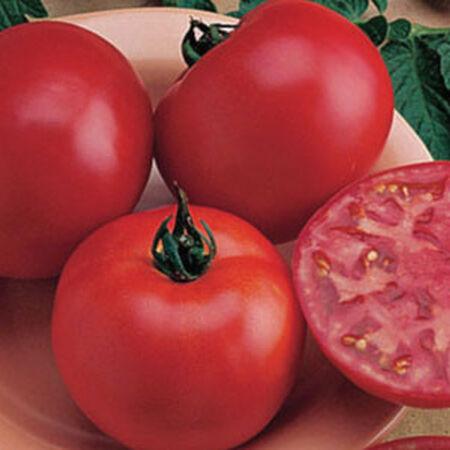 Burpee's Bush Big Boy, Tomato Seeds - Packet image number null