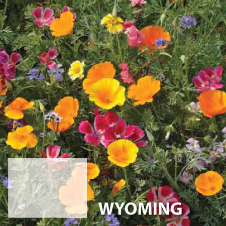 Wyoming Blend, Wildflower Seed - 1 Ounce image number null