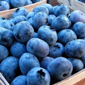 Jersey, Blueberry Plant