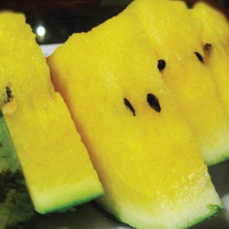 Yellow Crunch, (F1) Watermelon Seeds image number null