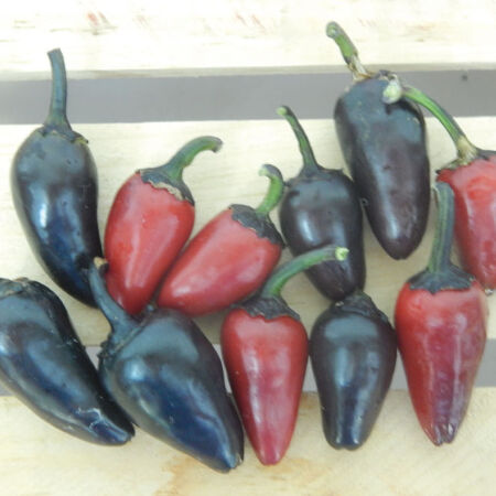 Count Dracula, Pepper Seeds - Packet image number null