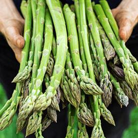 Atlas, (F1) Asparagus Seeds