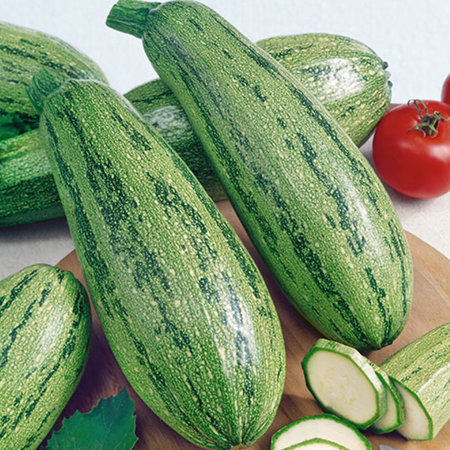 Caserta, Zucchini Seeds - Packet image number null