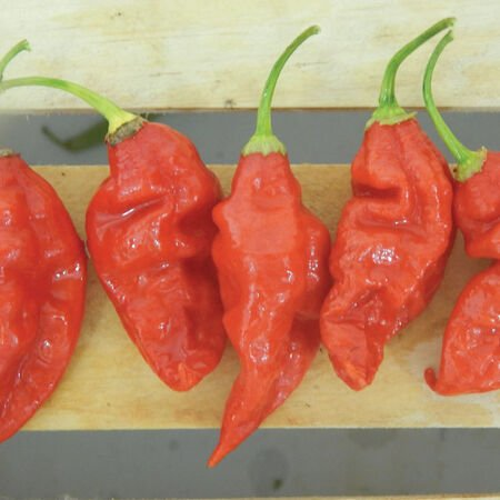 Trinidad Scorpion Butch T, Pepper Seeds - Packet image number null