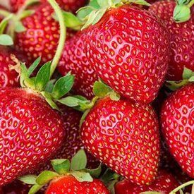 Ozark Beauty Everbearer, Strawberry Roots