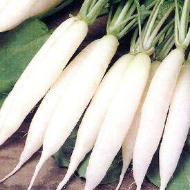 White Icicle, Radish Seeds