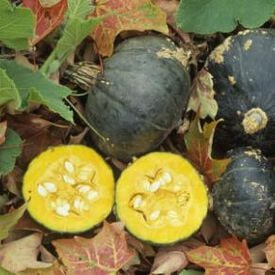 Buttercup Burgess, Squash Seeds