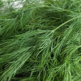 Bouquet, Dill Seed