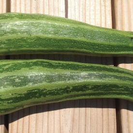 Cocozelle, Zucchini Seeds