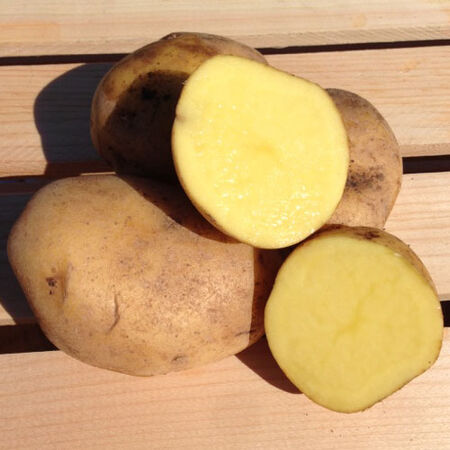 German Butterball, Seed Potatoes - 2 Pounds image number null