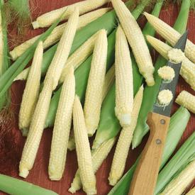 Japanese Hulless, Corn Seed