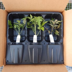 Live Plant Shipping Container