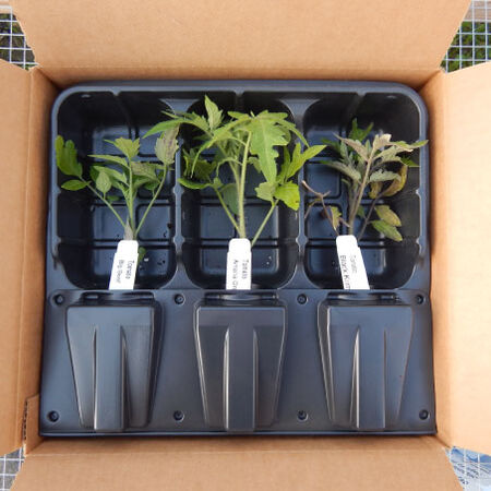 Live Plant Shipping Container - 5 Pack image number null