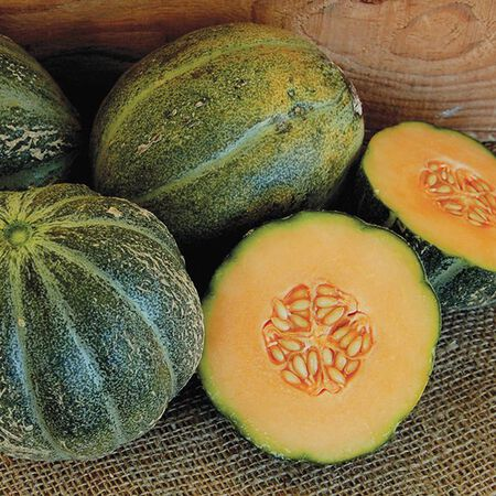 Emerald Green Gem, Cantaloupe Seeds - Packet image number null