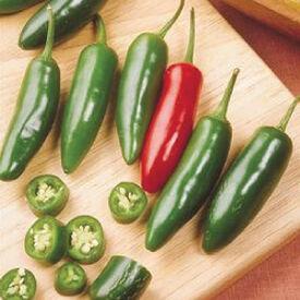 Serrano, Pepper Seeds