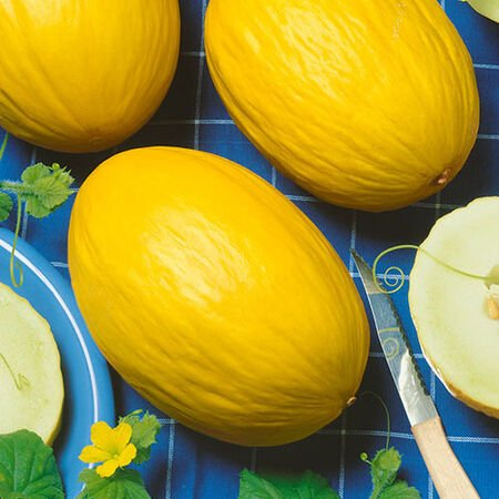 Juane Canary, Melon Seeds - Packet image number null