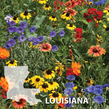 Louisiana Blend, Wildflower Seed - 1 Ounce image number null