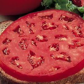 Parks Whopper, (F1) Tomato Seeds