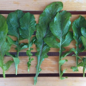 Roquette Arugula Seeds, Greens