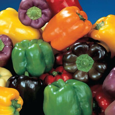 Rainbow Blend Bell, Pepper Seeds - Packet image number null