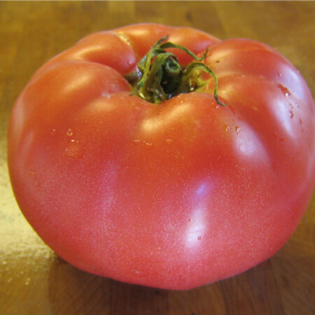Red Beefsteak, Tomato Seeds - Packet image number null
