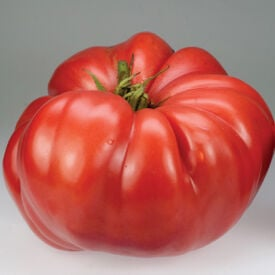 German Giant, Tomato Seeds