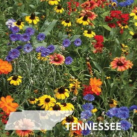 Tennessee Blend, Wildflower Seed