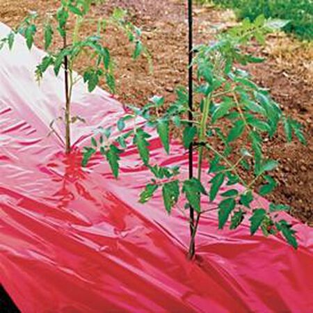 Red Tomato Mulch Seed,  Tomato Helpers - 50' Roll image number null