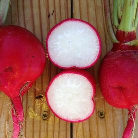 Crimson, Radish Seeds