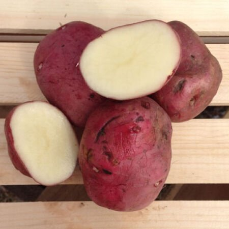 Red Norland, Seed Potatoes image number null