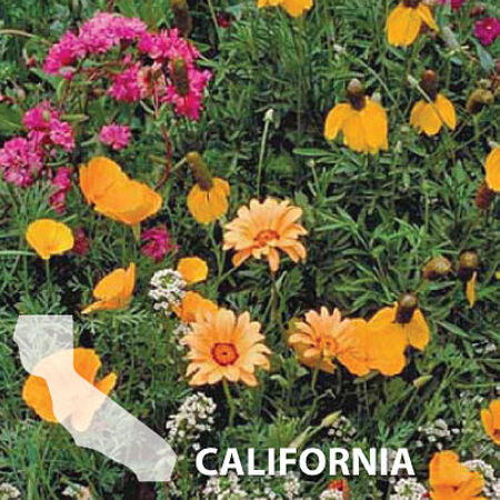 California Blend, Wildflower Seed - 1 Ounce image number null
