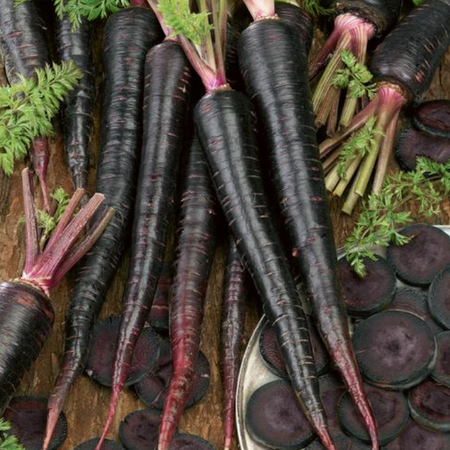 Black Nebula, Carrot Seeds - 1/4 Ounce image number null