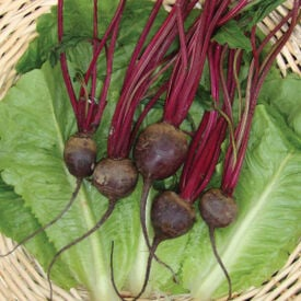 Detroit Dark Red, Beet Seeds