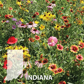 Indiana Blend, Wildflower Seed