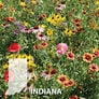 Indiana Blend, Wildflower Seed - 1 Ounce thumbnail number null