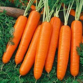 Nantes, Organic Carrot Seeds