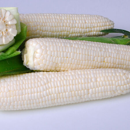 Argent, Corn Seed - 1/4 Pound image number null