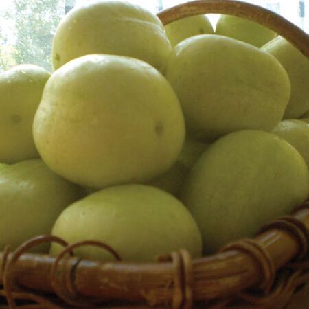 Lemon, Cucumber Seeds - Packet image number null
